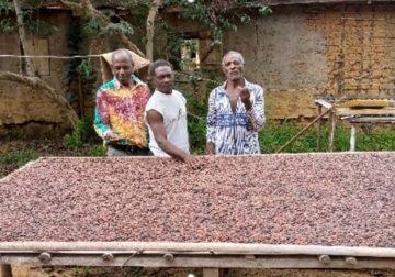 Soutien des petits agriculteurs et coopératives dans le Woleu-Ntem : L'apport d'Olam Rubber Gabon (ORG)